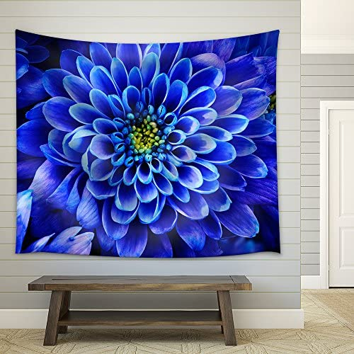 Close Up of Blue Flower : Aster with Blue Petals and Yellow Heart for Background or Texture Fabric Wall