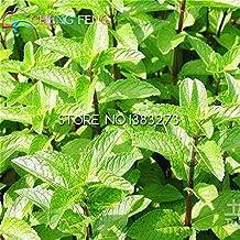 100 Spearmint Mint Seeds Edible Catnip Balcony Herb Seed Garden Bonsai For Planting Nepeta Cataria Flowering Pot Pet Best Gift