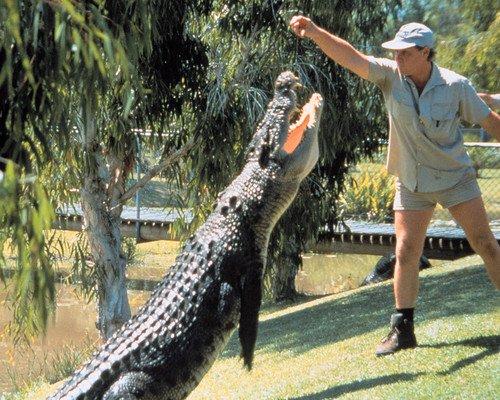 Crocodile Hunter Steve Irwin feeding huge croc 8x10 HD Aluminum Wall Art