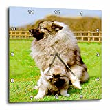 3dRose Dogs Keeshond – Keeshond – 10×10 Wall Clock (dpp_489_1) Review