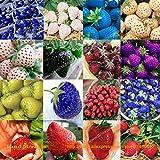 Go Garden 200PCS 16 Types Mini Fruits Strawberry Mix Seed' s Super Organic Giant Strawberry ' Bonsai' Berries Non-GMO