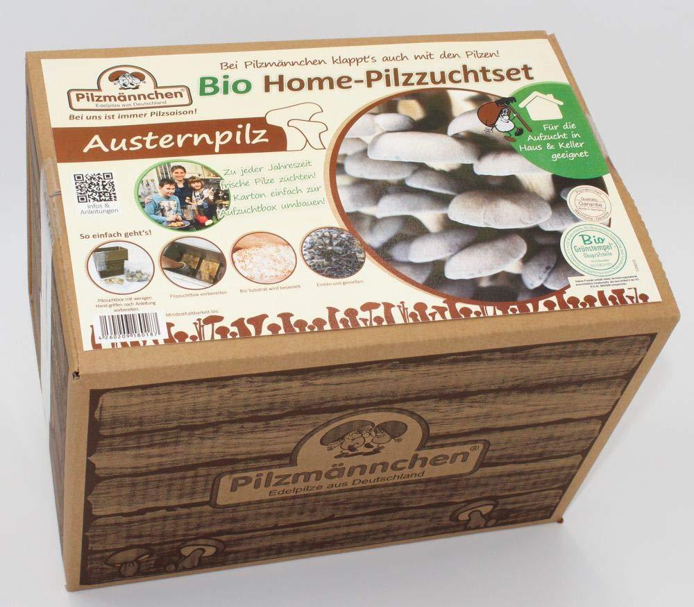 BIO Pilzzuchtset vom Austernpilz mit eigener Zuchtbox Pilzmännchen