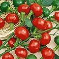 Everwilde Farms - Red Cherry Hots Hot Pepper Seeds - Gold Vault