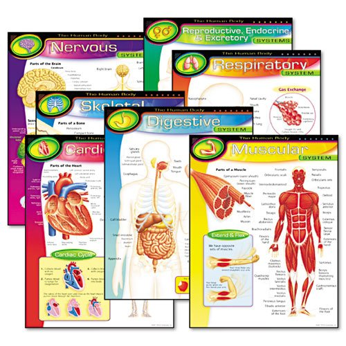 Trend The Human Body Learning Chart (38913) by Trend