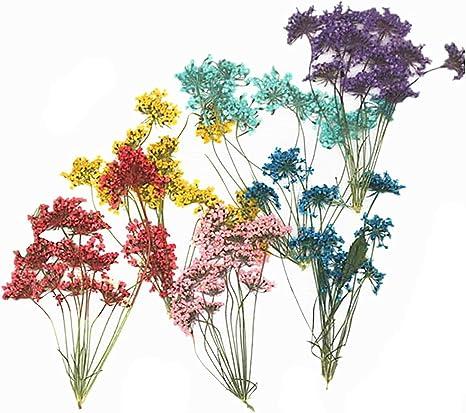 12 Paquetes de Flores Secas Reales Prensadas Fabricación de Papel de