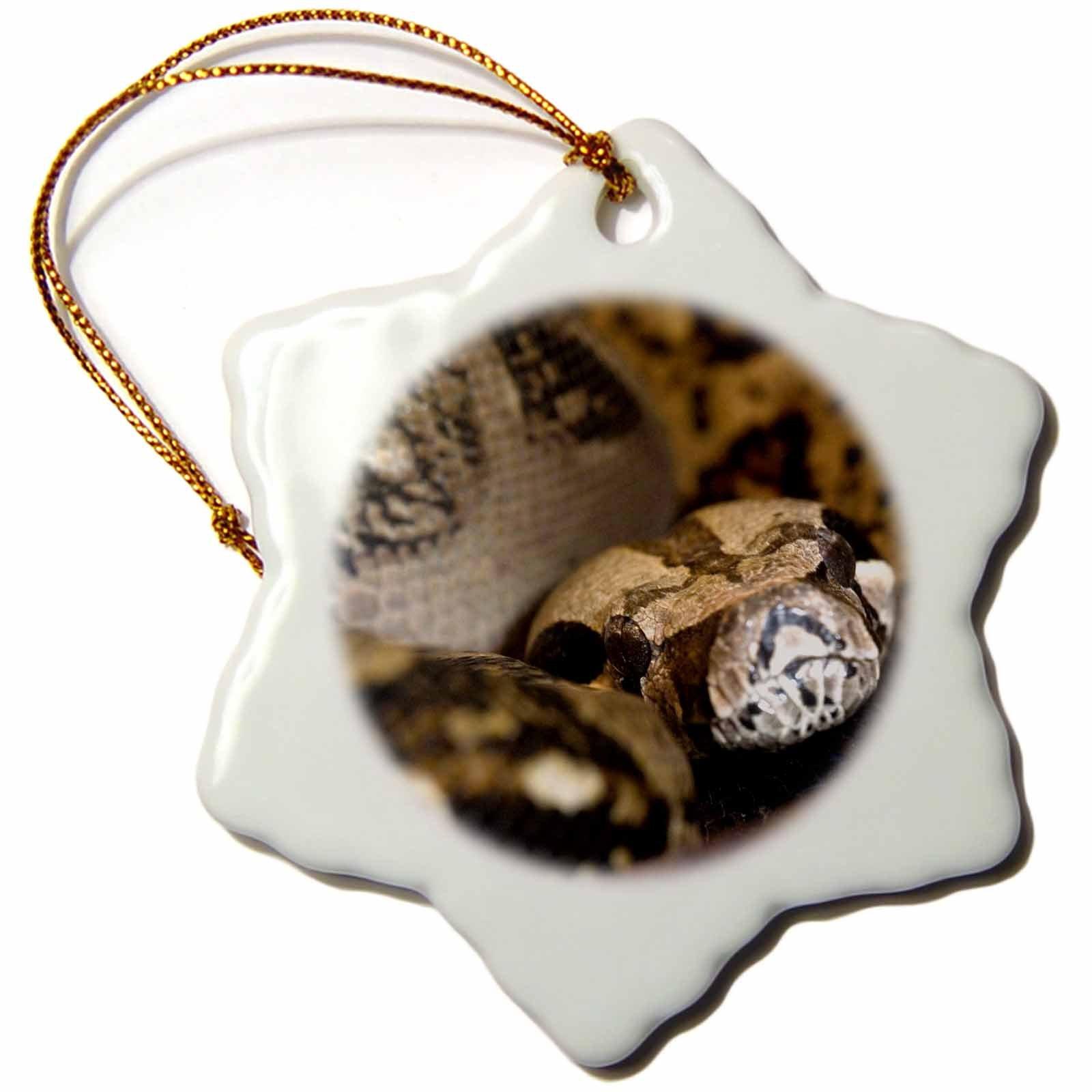 3dRose orn_83712_1 Boa constrictor Snake NA02 CZI0002 Christian Ziegler Snowflake Porcelain Ornament, 3-Inch