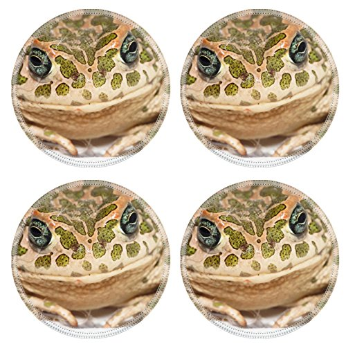 MSD Natural Rubber Round Coasters IMAGE ID 33729984 Big Ugly Frog Common European Toad Bufo Deluxe Amphibian