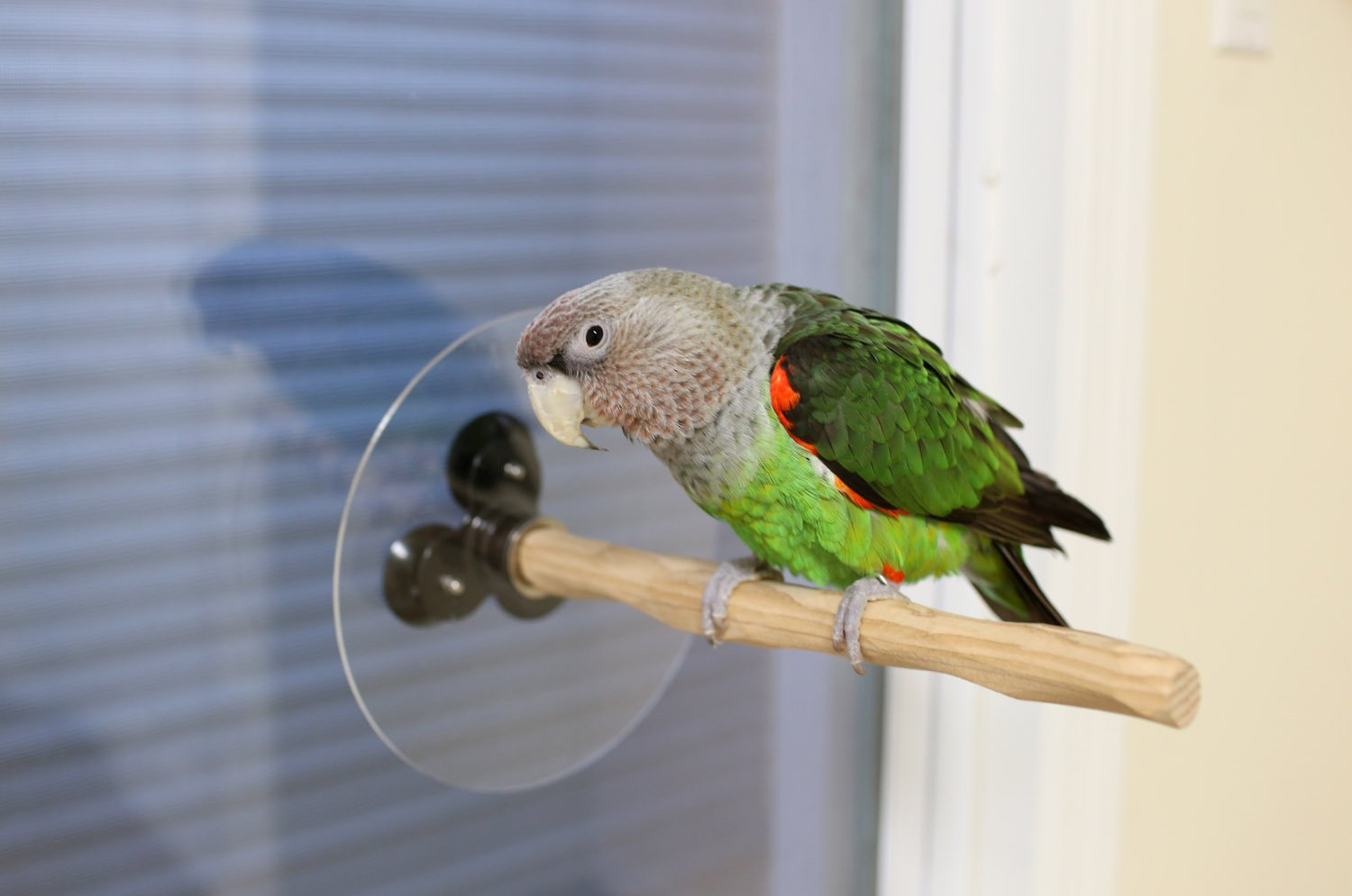 Window NU Perch for Small to Medium Parrots by Parrot Wizard