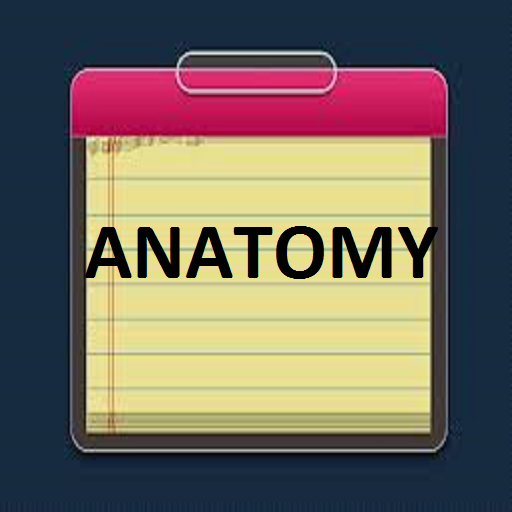 anatomy study guide Introducing the free anatomy study guide app by #americasnavy navigate over 10 high-res 3-d diagrams of the human body, take notes and share with others, and even quiz yourself on what you've learned.