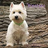 Westies Calendar - 2016 Wall calendars - Dog Calendars - Monthly Wall Calendar by Magnum