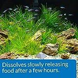 API VACATION PYRAMID FISH FEEDER 14-Day 1.2-Ounce