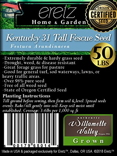 Kentucky 31 Tall Fescue Grass Seed by Eretz - Willamette Valley, Oregon Grown (50lbs)