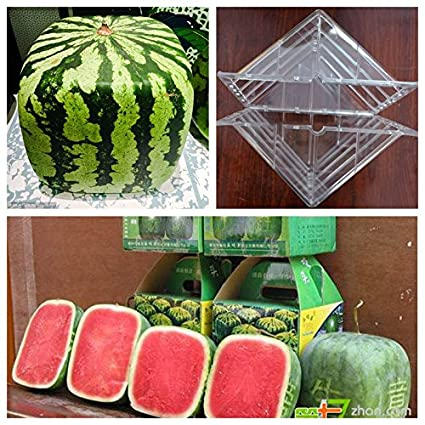 Amazon.com: Molde de sandía con forma cuadrada: Jardín y ...