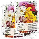 Seed Needs, Crazy Cosmos Mixture (Cosmos sulphureus & bipinnatus) Twin Pack of 400 Seeds Each