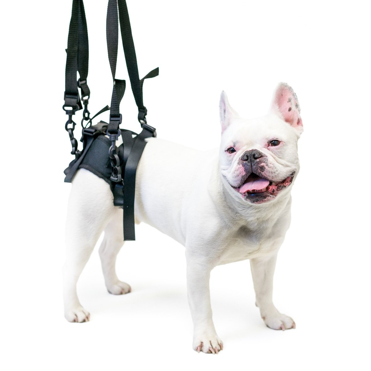 Amazon walkin lift rear mobility harness pet halter amazon walkin lift rear mobility harness pet halter harnesses pet supplies pooptronica Images