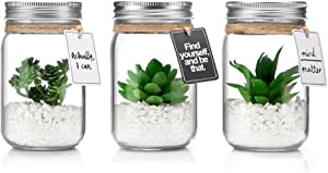 Opps Mini Artificial Green Succulent Plants with Special Rope Design Clear Glass Jar – Set of 3