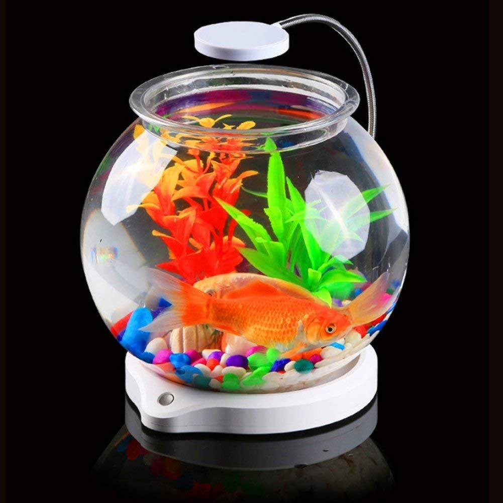 bayrick - Mini pecera ecológica Pequeña acuarios acuarios Hermosos Peces Dorados Cuenco Kit + luz LED: Amazon.es: Productos para mascotas