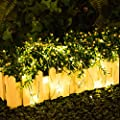 LightsEtc 33ft 100 LED Fairy Lights Copper Wire USB Rope Lighting String for Christmas Holiday Party Indoor Outdoor Homes D¨¦cor