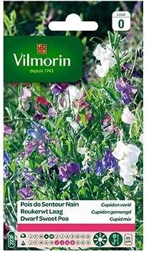 Pois Senteur Spencer Varie Serie 1 Vilmorin Jardin