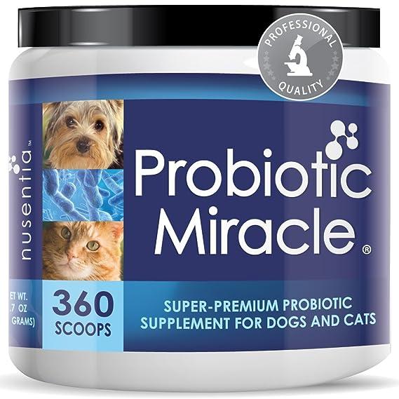 Amazon Com Nusentia Probiotic Miracle Dog Probiotics For Dogs Up