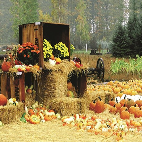 LFEEY 10x10ft Fall Farm Harvest Backdrop Piles Of Pumpkins Rustic Haystack Photography Background Autumn Straw Bales Hay Rural Crops Countryside Farmland Barn Halloween Thanksgiving Photo Studio Props