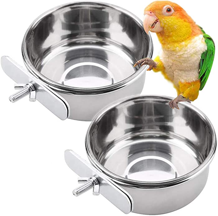 The Best Parot Food Bowls