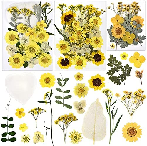 DROLE 80pcs Yellow Dried Flowers Real Leaves and Flowers for Resin, Jewelry Making, Crafts, Soap, Decorate Home