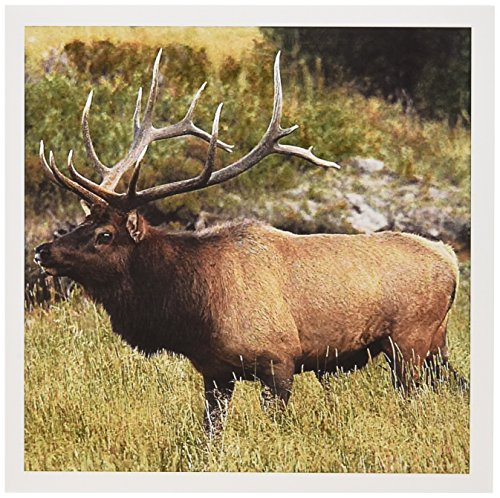 3dRose Elk Wildlife, Rocky Mountains, Colorado, USA Greeting Cards, 6
