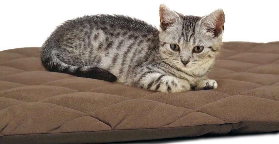 Flectabed Q Petlife Cama térmica para perro/gato, 91,4 x 71,1 cm, color marrón: Amazon.es: Productos para mascotas