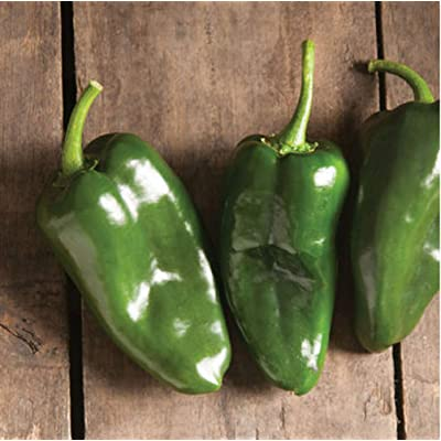 David's Garden Seeds Pepper Hot Ancho Pablano Bastan SL8374 (Green) 25 Non-GMO, Hybrid Seeds : Garden & Outdoor