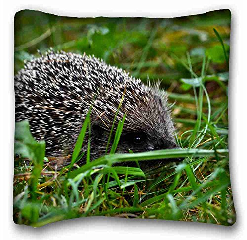 Custom ( Animals Green grass Crew cut needles hedgehog ) Popular 16x16 inch One Side Pizza Rectangle Pillowcase suitable for Twin-bed (Green Needle Grass)