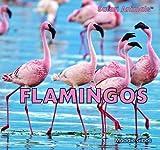 Flamingos, Maddie Gibbs, 1448831849