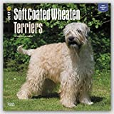 Wheaten Terriers, Soft Coated 2017 Square (Multilingual Edition)