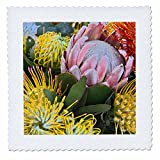 3dRose Danita Delimont - Flowers - USA, Hawaii, Maui, Wild Flowers of Hawaii - 20x20 inch quilt square (qs_259250_8)