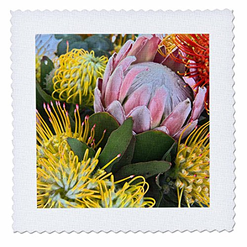 3dRose Danita Delimont - Flowers - USA, Hawaii, Maui, Wild Flowers of Hawaii - 20x20 inch quilt square (qs_259250_8) by 3dRose