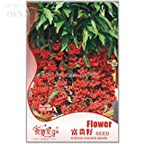 2018 Hot Sale!! Ardisia Crenata Christmas Coral Berry Ornamental Tree, Original Pack,12 Seeds, Tropical Or Indoor No Drought IWSA162