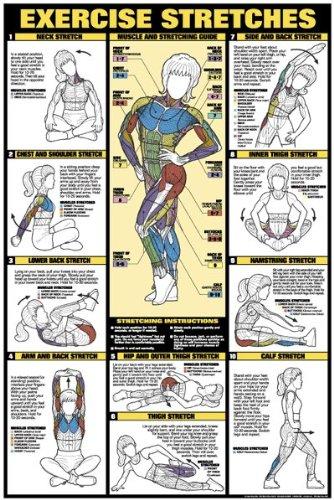amazon com exercise stretches 24 x 36 laminated chart fitness