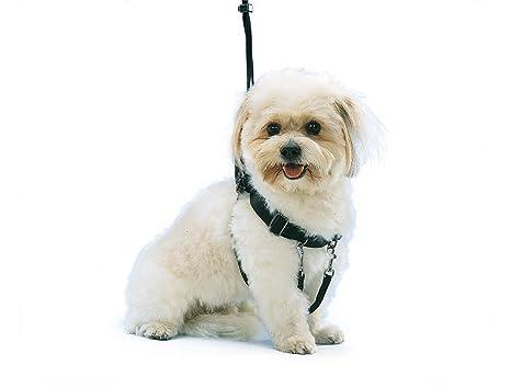Nobby fácil andador arnés para perro: Amazon.es: Productos ...