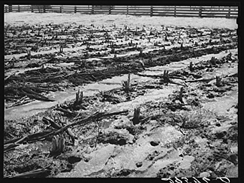 1940 Photo Melting snow. Hayes County, Nebraska Location: Hayes County, Nebraska