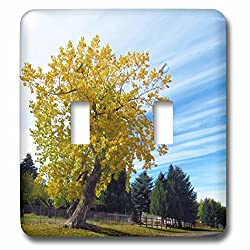 3dRose Jos Fauxtographee- Delightful Fall Tree - A perfect fall day with a tree having yellow leaves and cool clouds - Light Switch Covers - double toggle switch (lsp_273452_2)