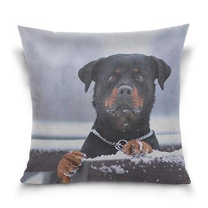 Amazoncom Pillow Case Rottweiler Dog Snow Collar Eyes Sofa Bed