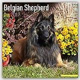 Belgian Shepherd Calendar 2017 - Dog Breed Calendars - 2016 - 2017 wall calendars - 16 Month by Avonside