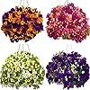 100 Pz/pacco Morning Glory Semi di fiori Semi di piretroidi Bellissimi fiori perenni Semi di fiori per giardino… 10 spesavip