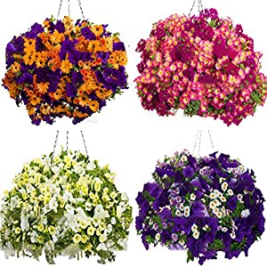 100 Pz/pacco Morning Glory Semi di fiori Semi di piretroidi Bellissimi fiori perenni Semi di fiori per giardino… 1 spesavip