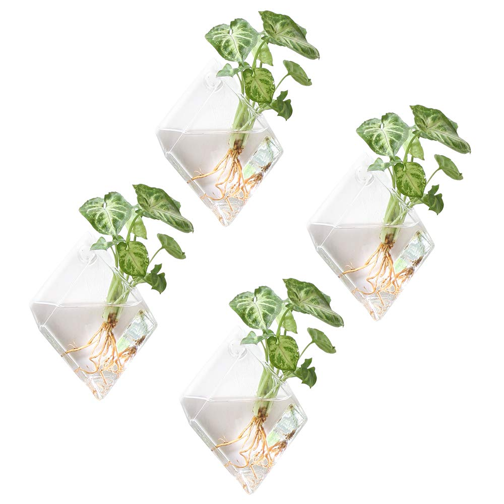 Mkono 4 Pack Glass Wall Mounted Plant Terrariums Air Plant Holder Indoor Hanging Planter Home Office Living Room Decor