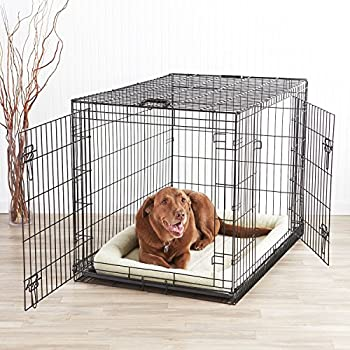 Amazon Com Amazonbasics Double Door Dog Crate And Padded