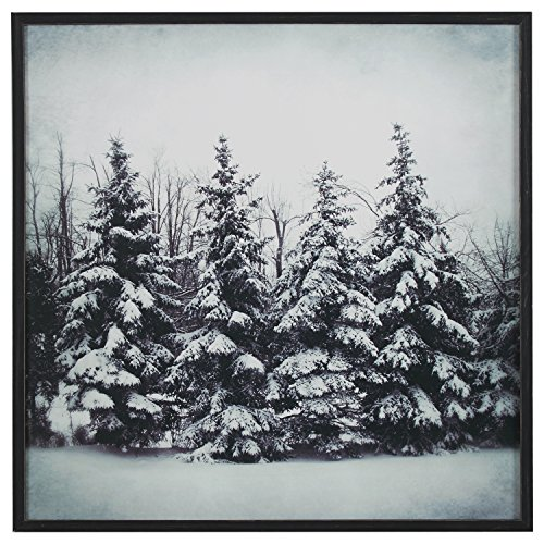 Modern Black and White Print of Forest Snow, Black Frame, 30'' x 30'' by Stone & Beam