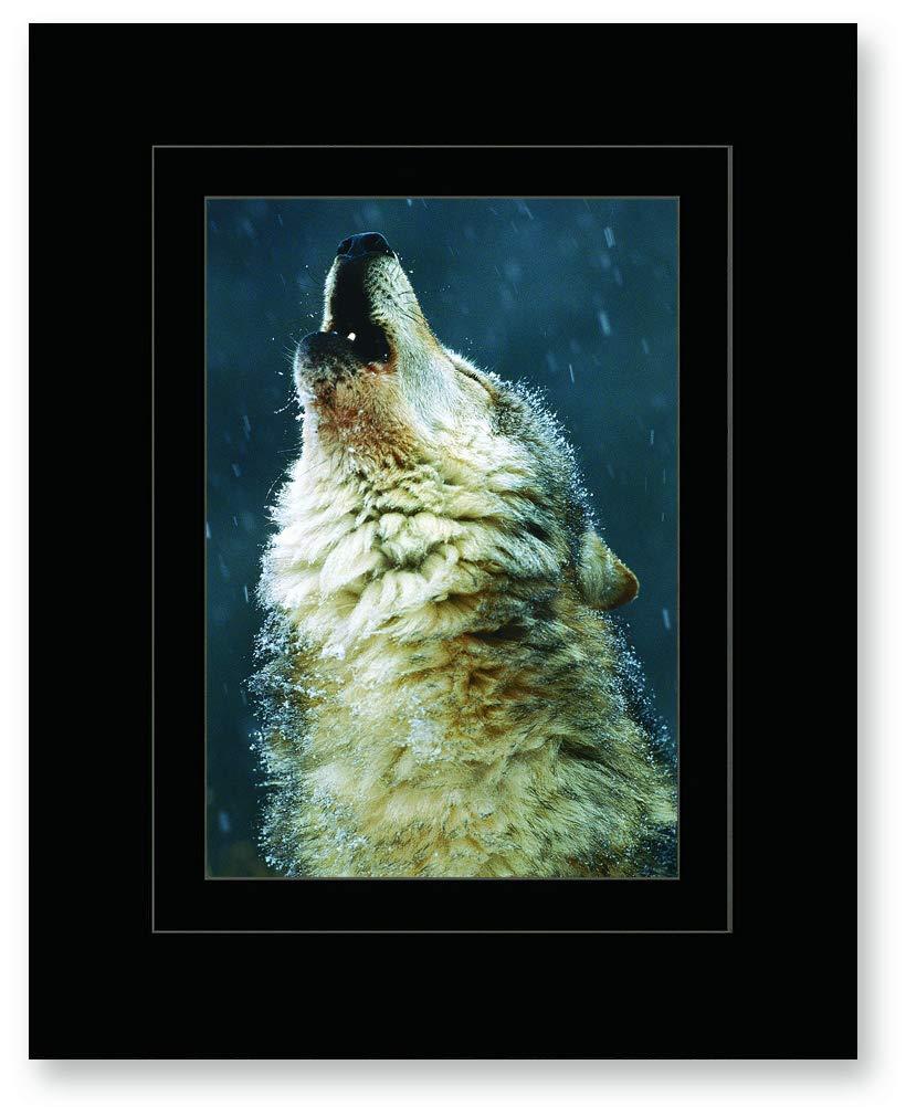 Wolf Holler Art Print