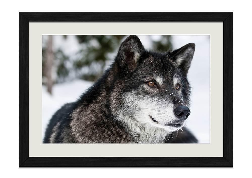 Amazon.de: CU. Rong Winter Schwarz Wolf Holz Rahmen Poster Home Art ...