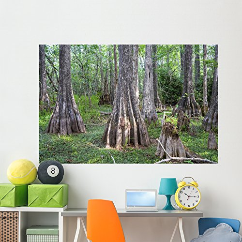 Wallmonkeys WM360760 Big Cypress National Preserve Florida USA Peel and Stick Wall Decals (72 in W x 48 in H), Colossal